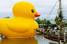 Quack at the wood ship.