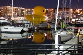Duck reflecting...